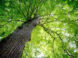 natuur_groot