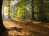 omgevingsvisie gelderland